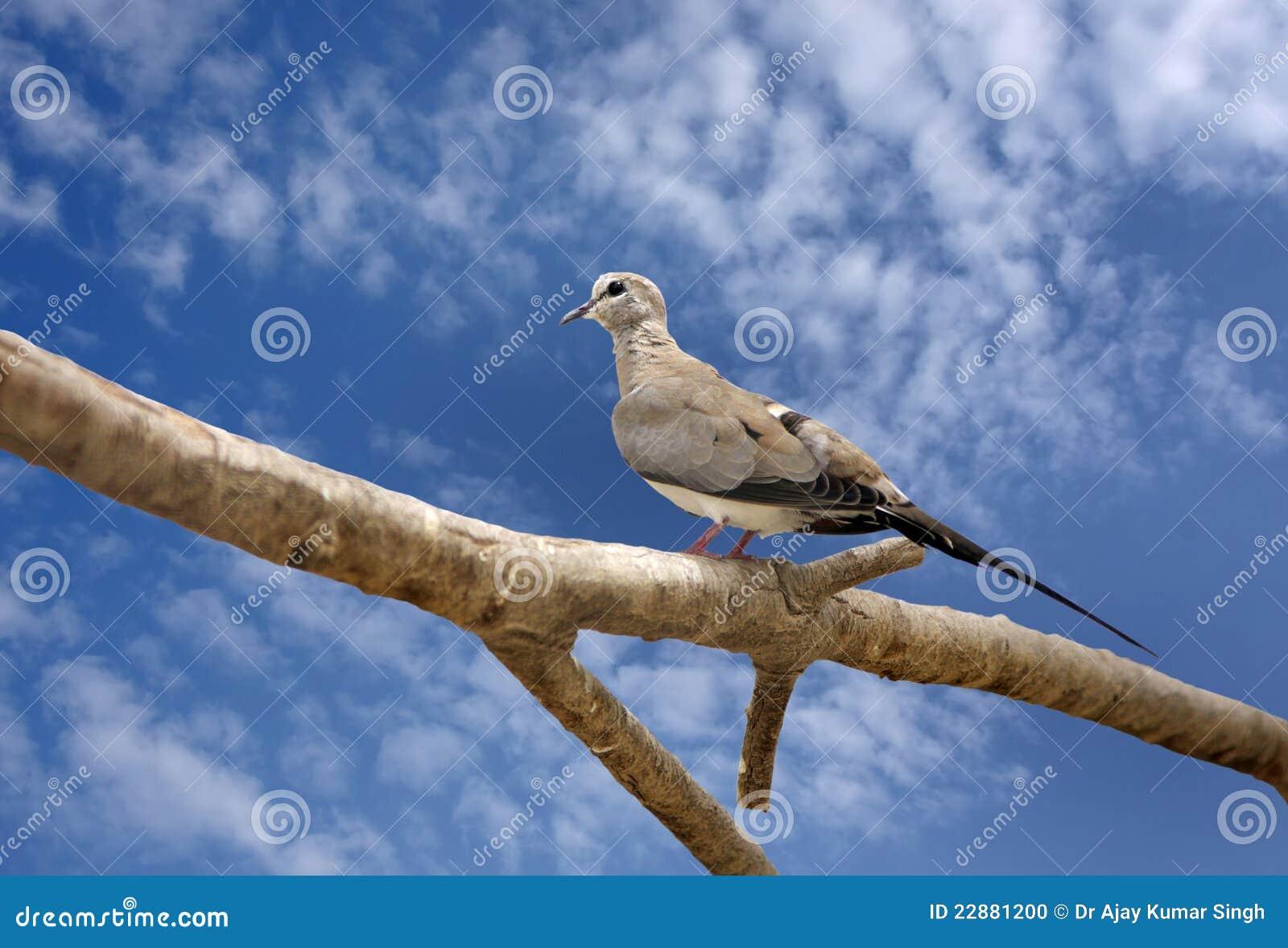красивейшее усаживание dove ветви