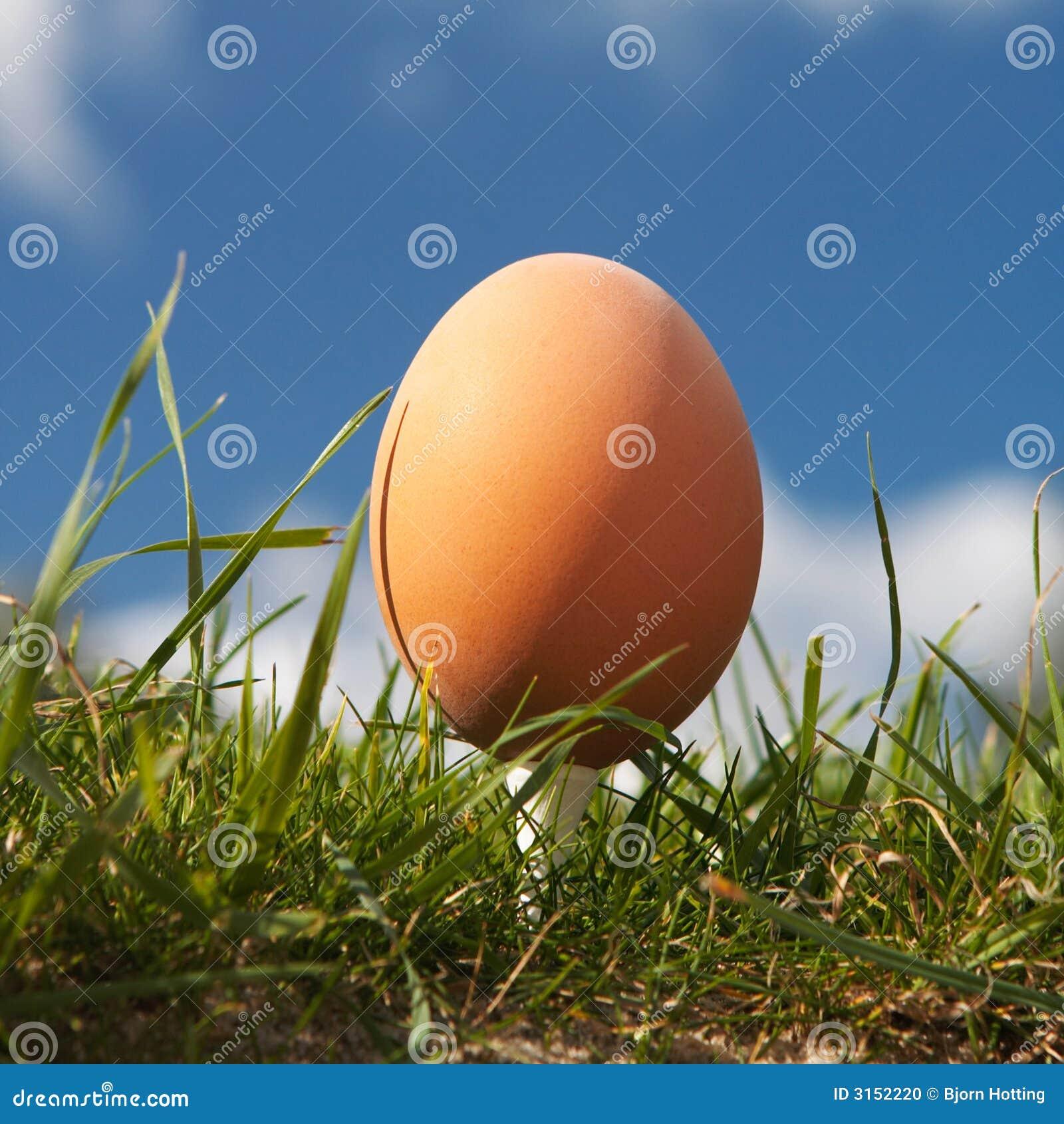красивейшее яичко