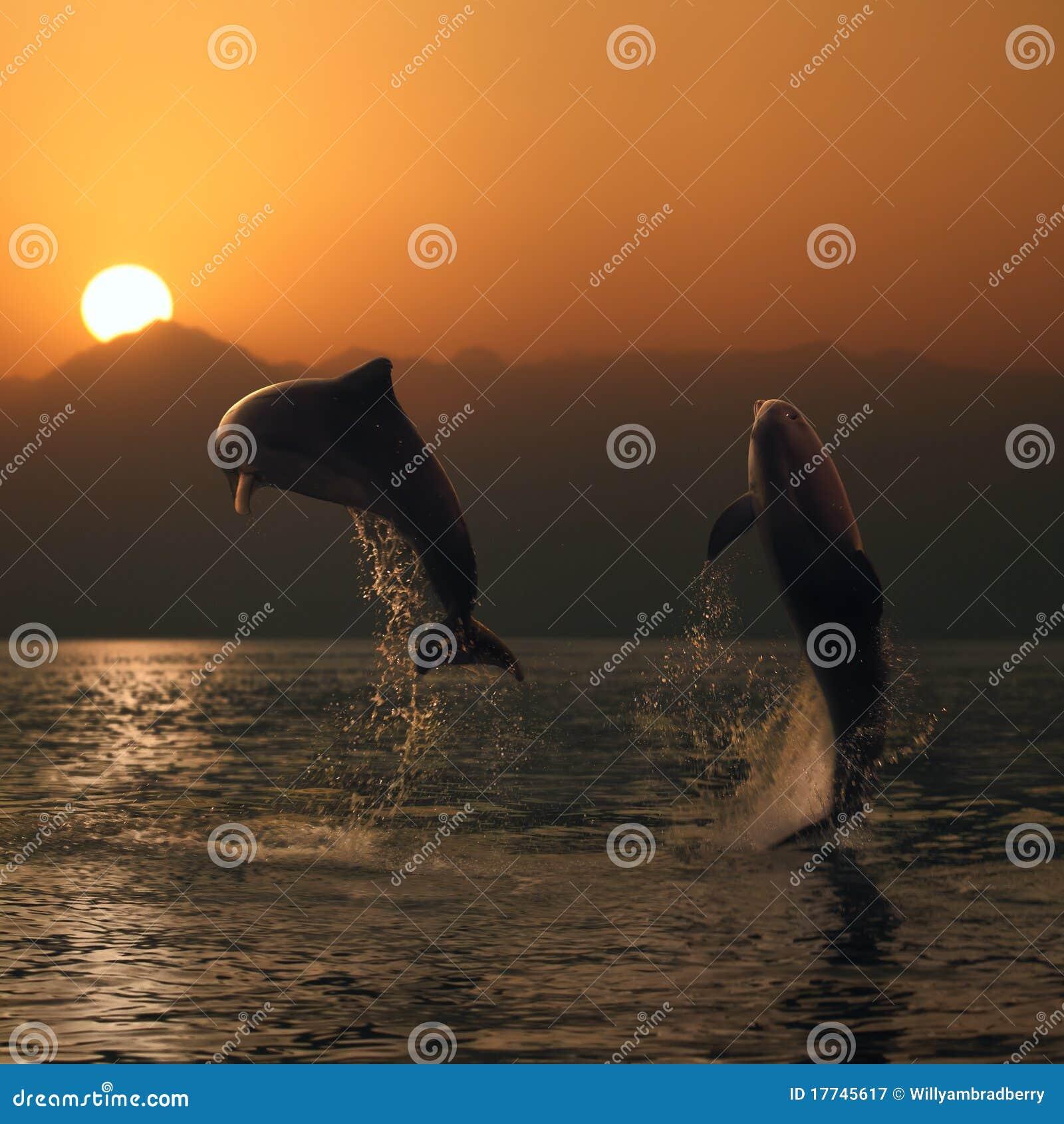 красивейшие дельфины перескакивая море 2 oceanview