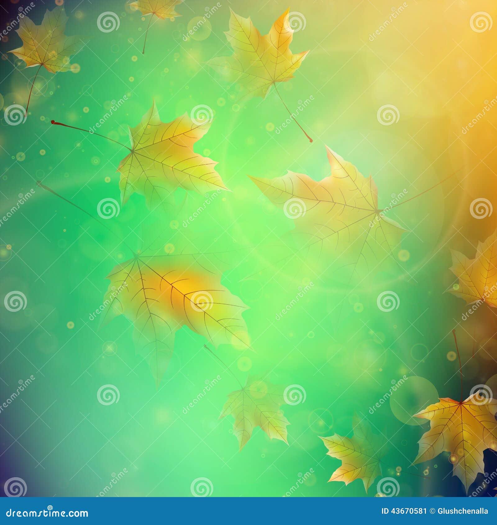 Красивейшие листья осени