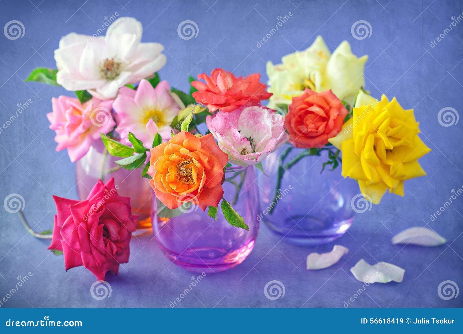 красивейшие свежие розы