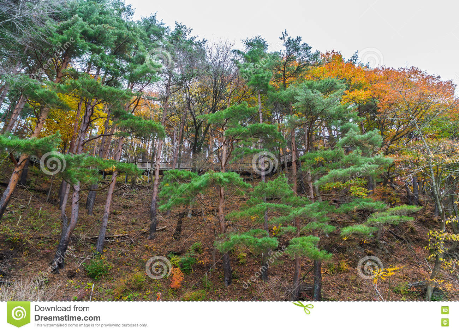 Download Красивейшие цветастые листья осени Стоковое Изображение - изображение насчитывающей environment, художничества: 72276661