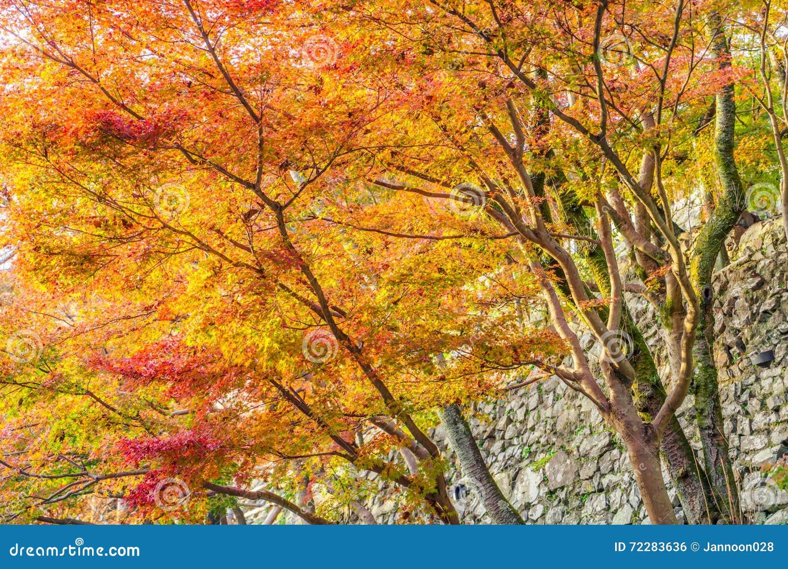 Download Красивейшие цветастые листья осени Стоковое Фото - изображение насчитывающей свет, снаружи: 72283636
