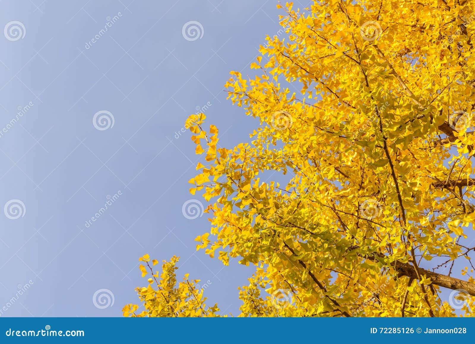 Download Красивейшие цветастые листья осени Стоковое Фото - изображение насчитывающей художничества, яркое: 72285126