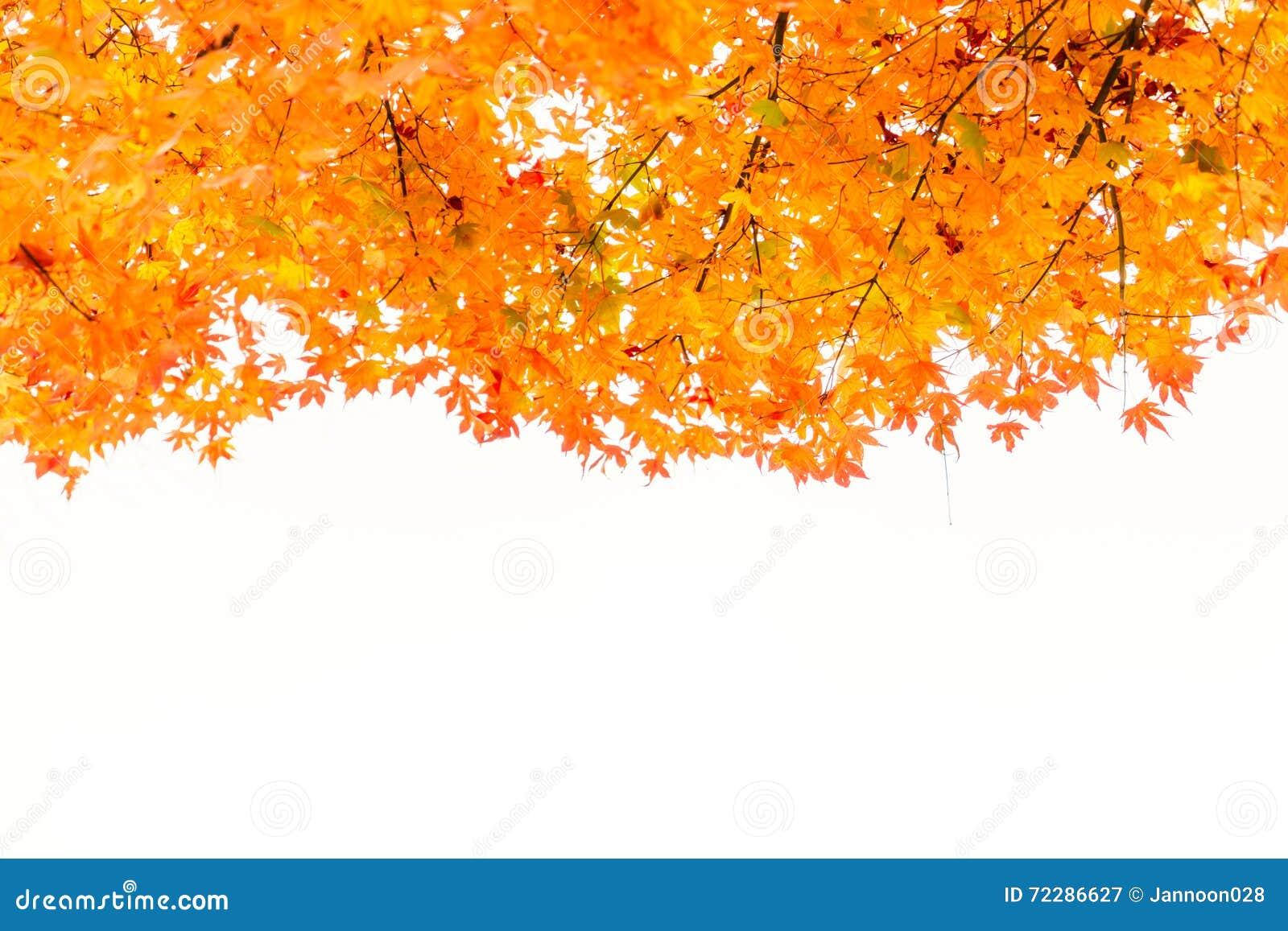 Download Красивейшие цветастые листья осени Стоковое Изображение - изображение насчитывающей green, напольно: 72286627