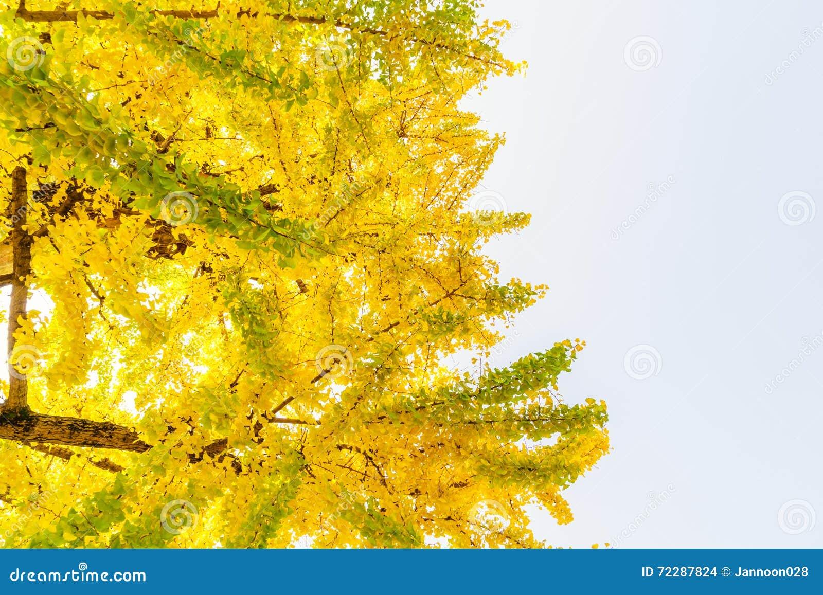 Download Красивейшие цветастые листья осени Стоковое Фото - изображение насчитывающей парк, напольно: 72287824