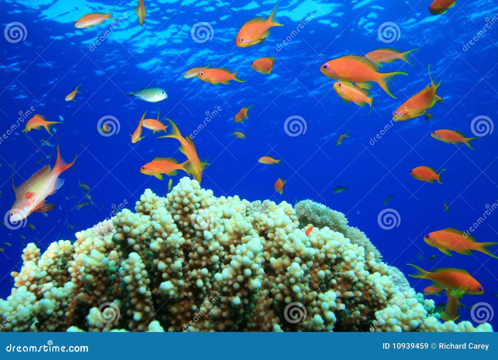 красивейший коралловый риф