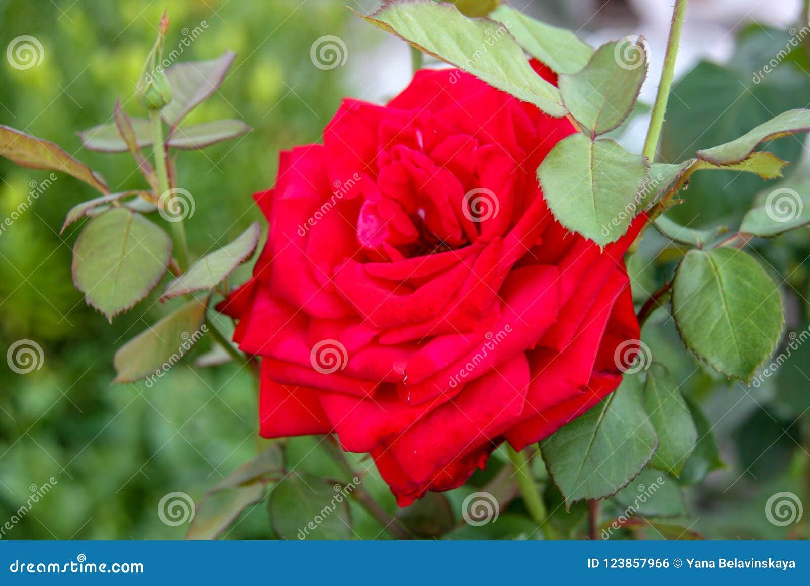 красивейший цветок поднял