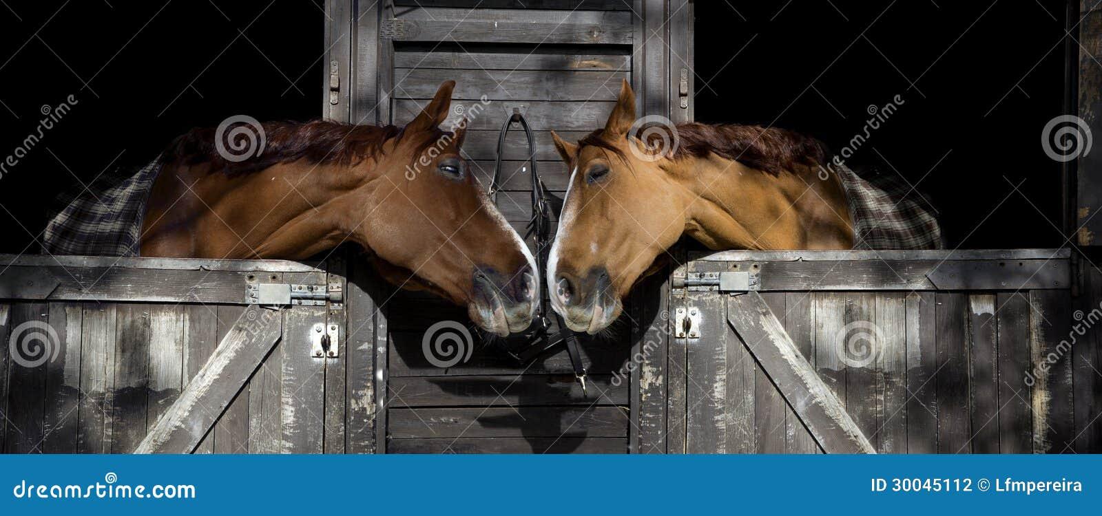 Лошади в влюбленности