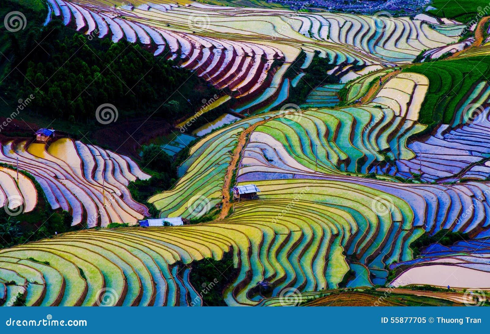 Красивое террасное поле риса в Mu Cang Chai, Вьетнаме