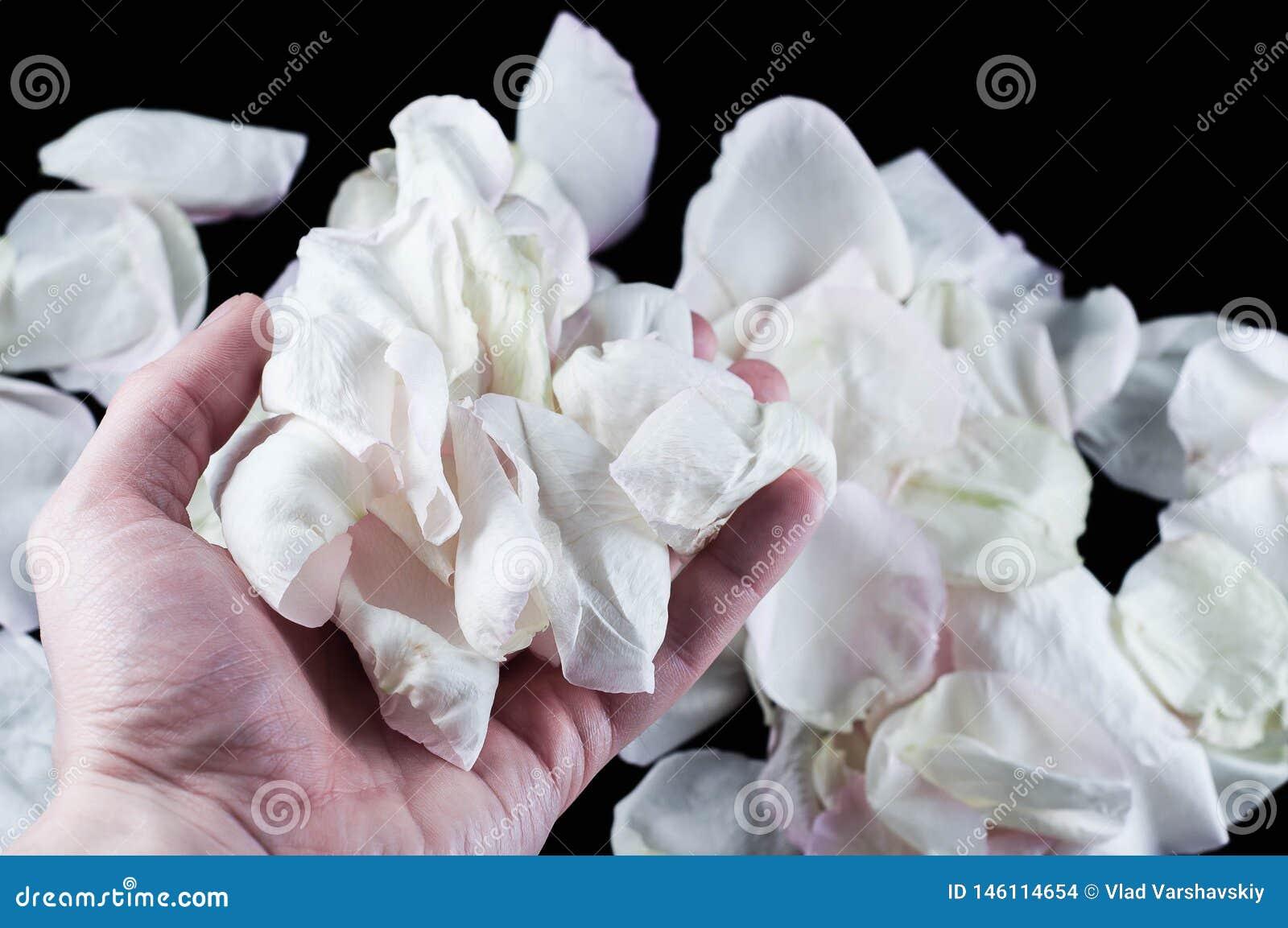 Красивые заводы с душистыми цветками как крытый
