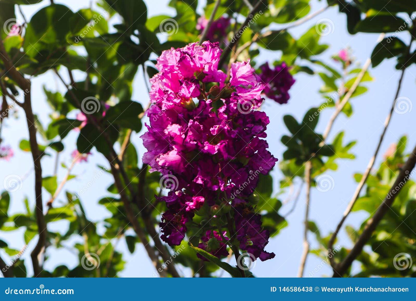 Красивые зеленые дерево, заводы, камень леса и цветки в открытых садах и общественных парках