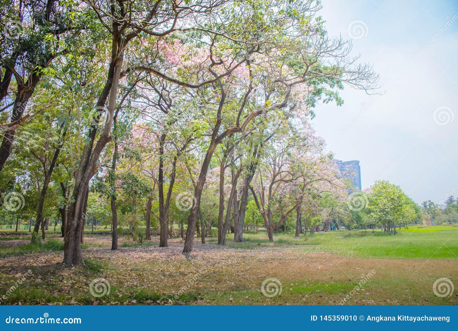 Красивые зеленые лужайка и деревья с парком голубого неба публично