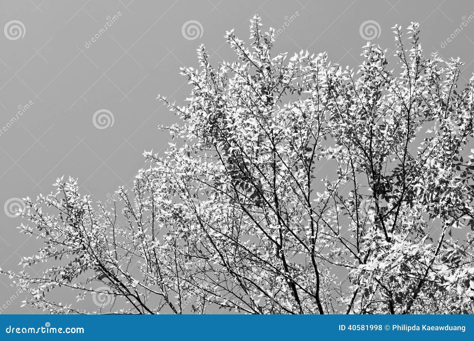 Красивые листья желтого цвета с голубым небом