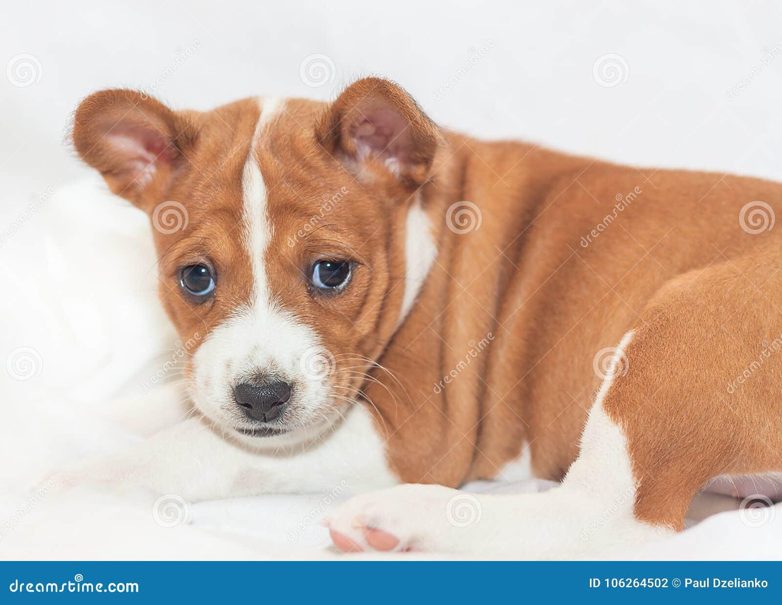 милые собаки и щенки