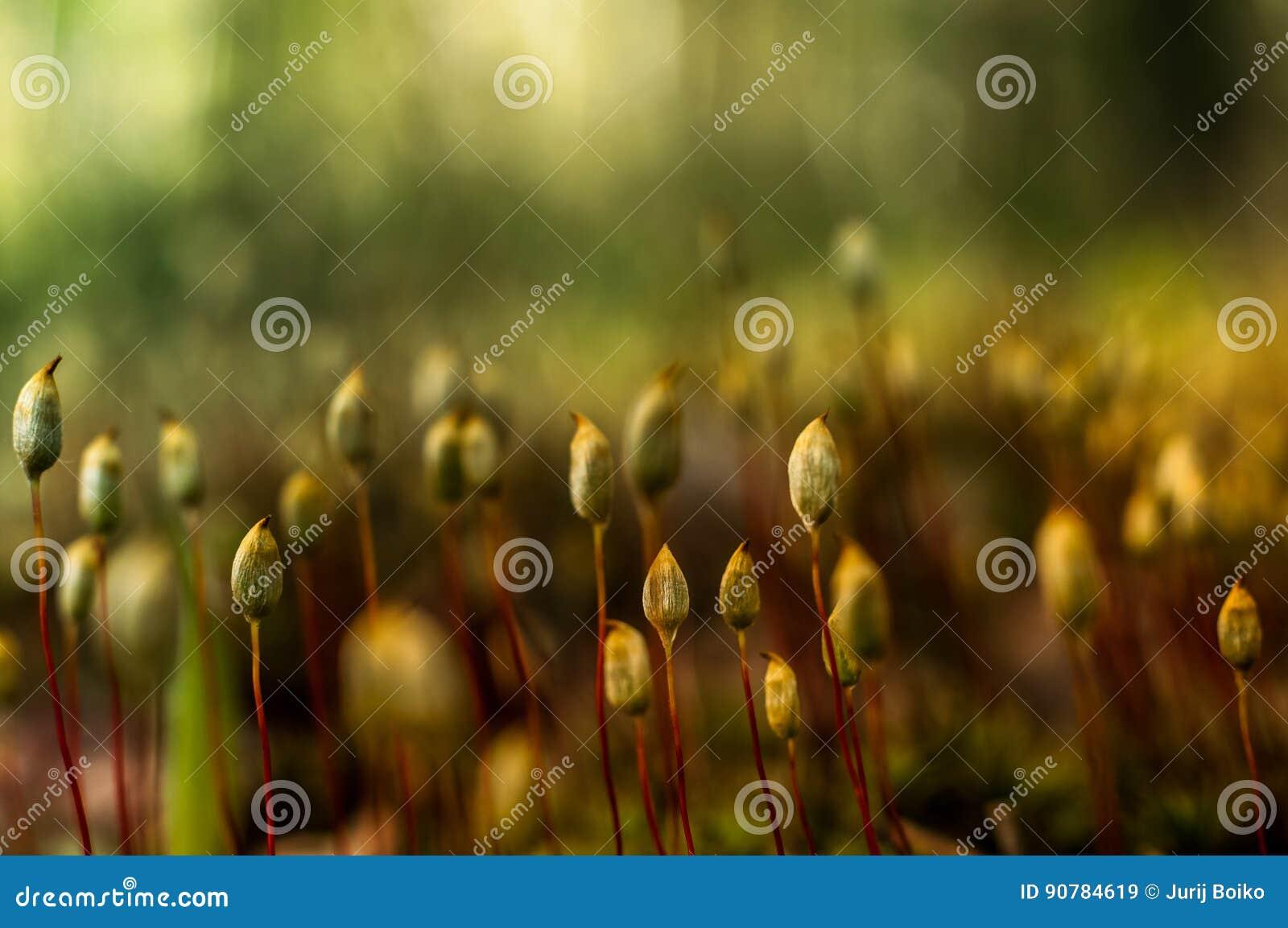 Красивые полевые цветки в лесе, под теплым светом утра