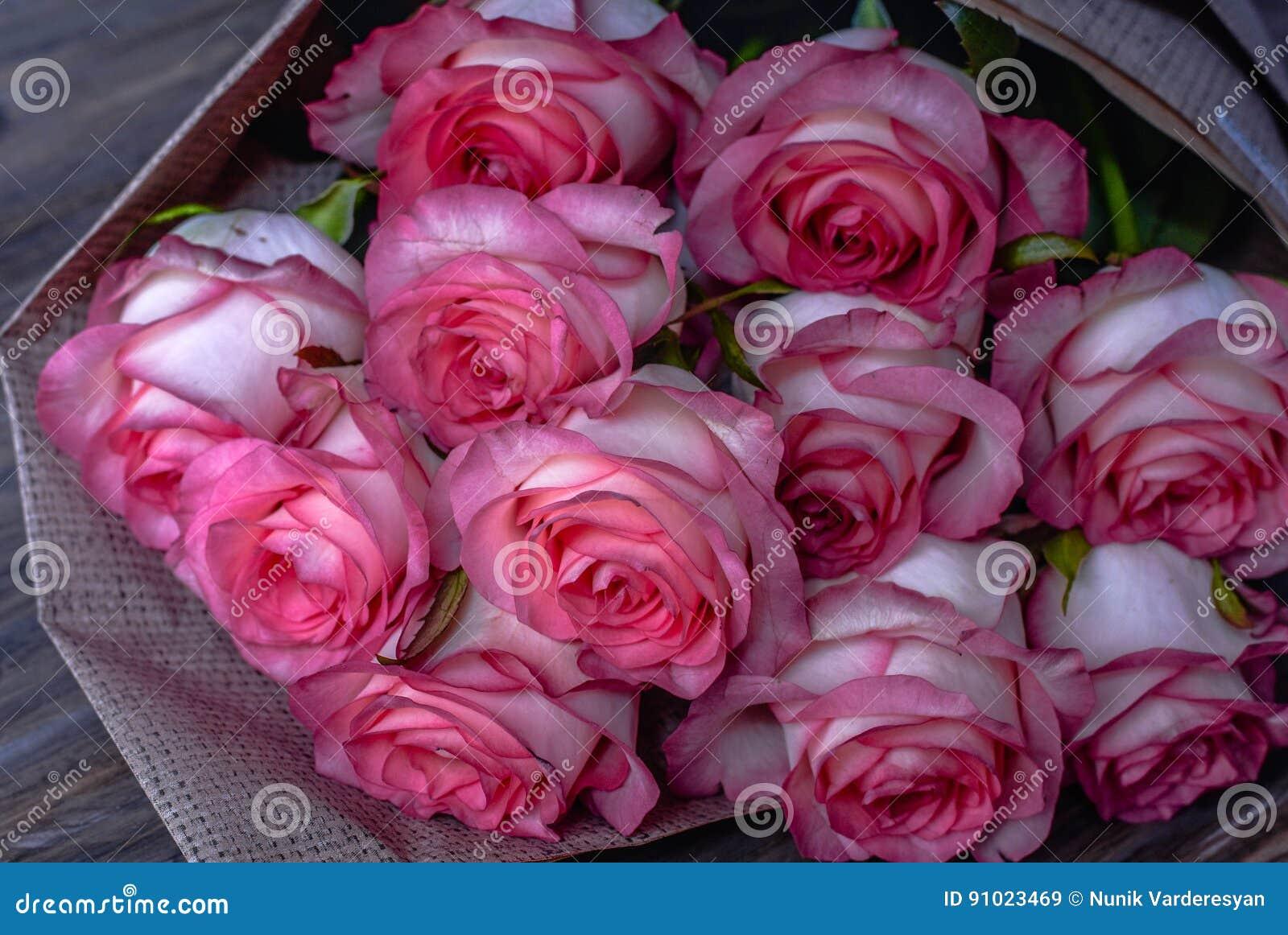 красивые розовые розы картинки