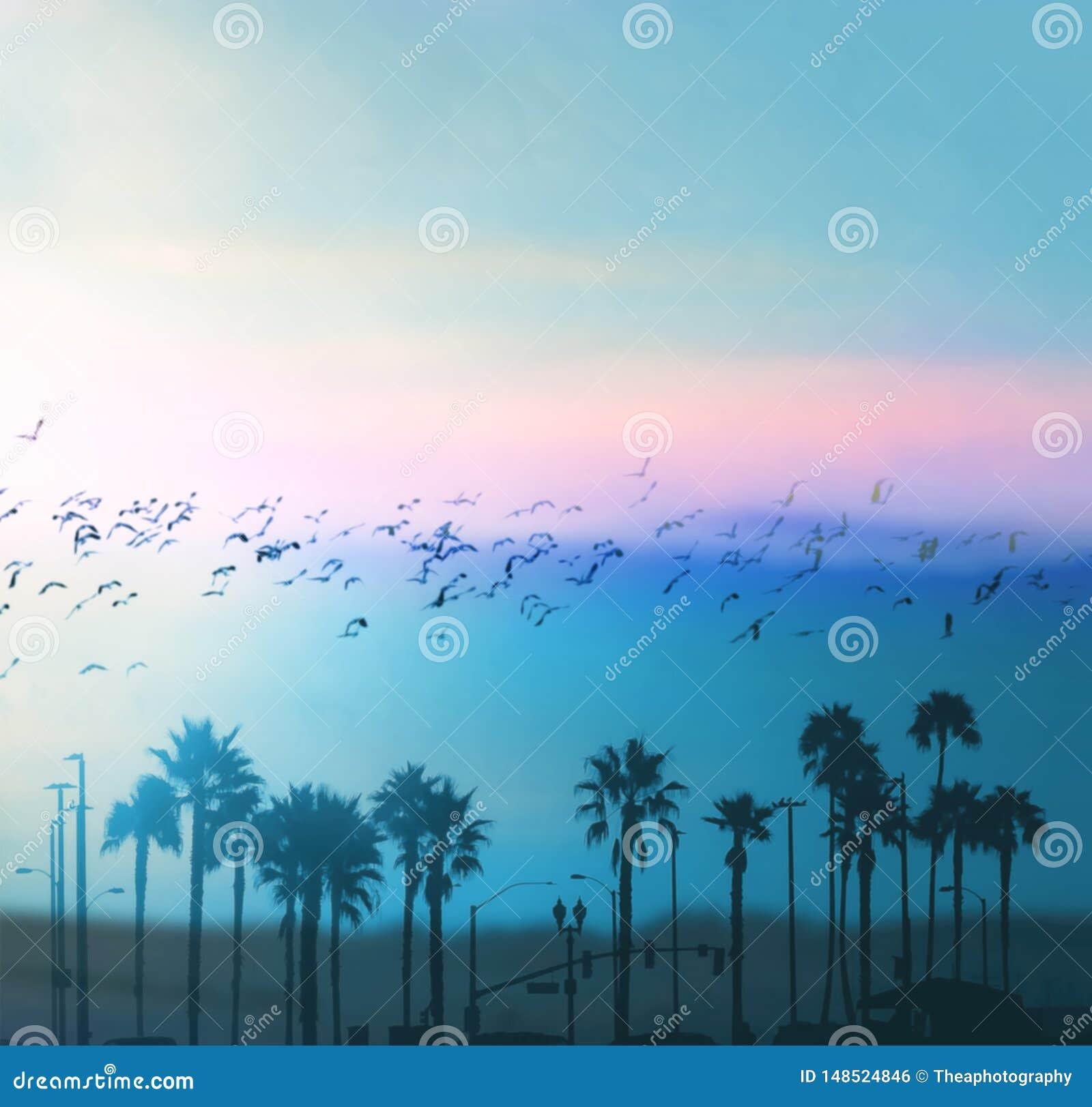 Красивые флюиды лета в Лос-Анджелесе