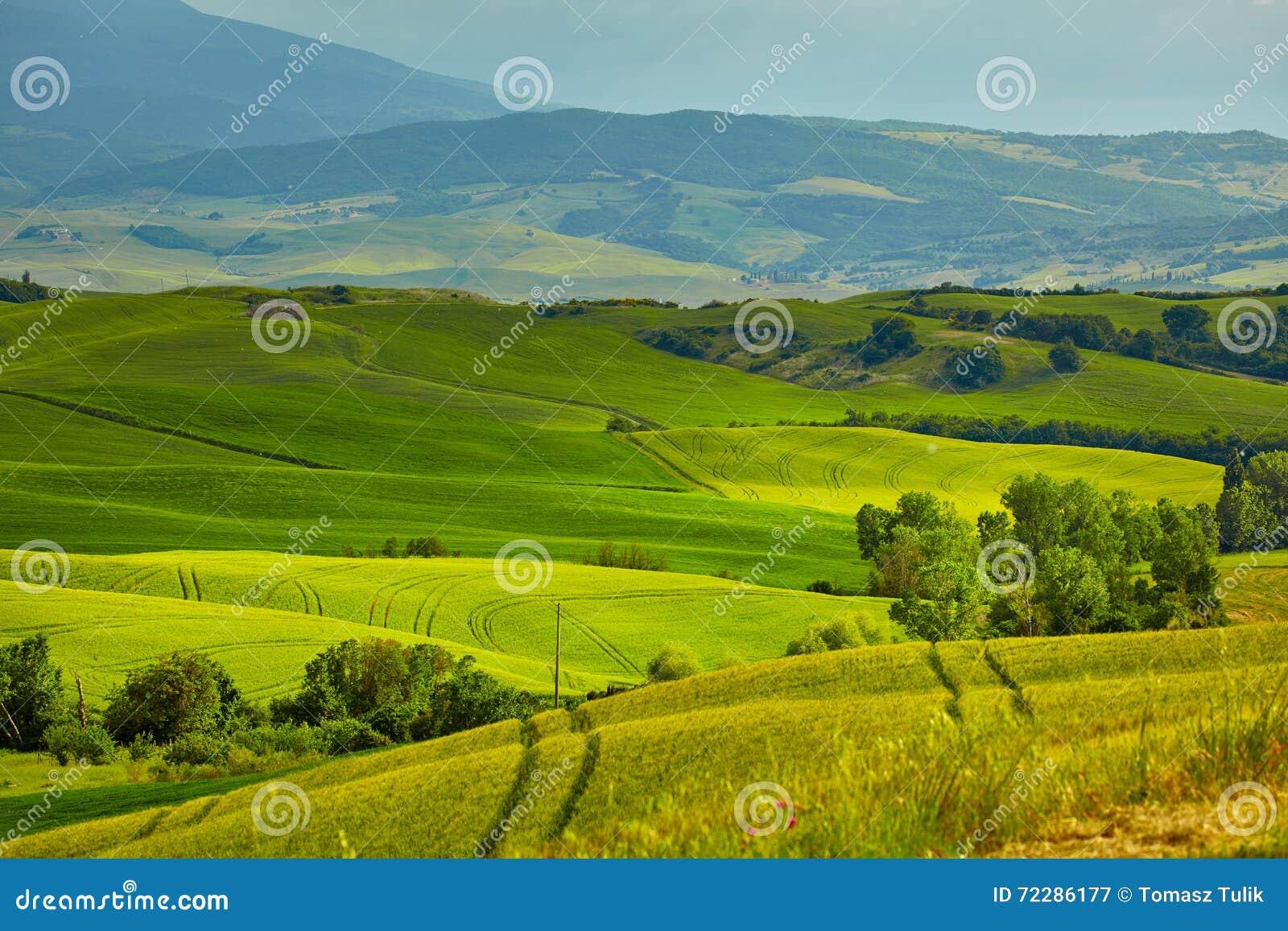 Download Красивые цвета весны в Тоскане Стоковое Изображение - изображение насчитывающей лужок, итальянско: 72286177