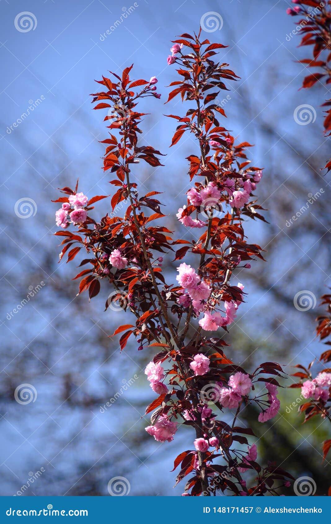 Красивые цветки в ботаническом саде Киева, Украины