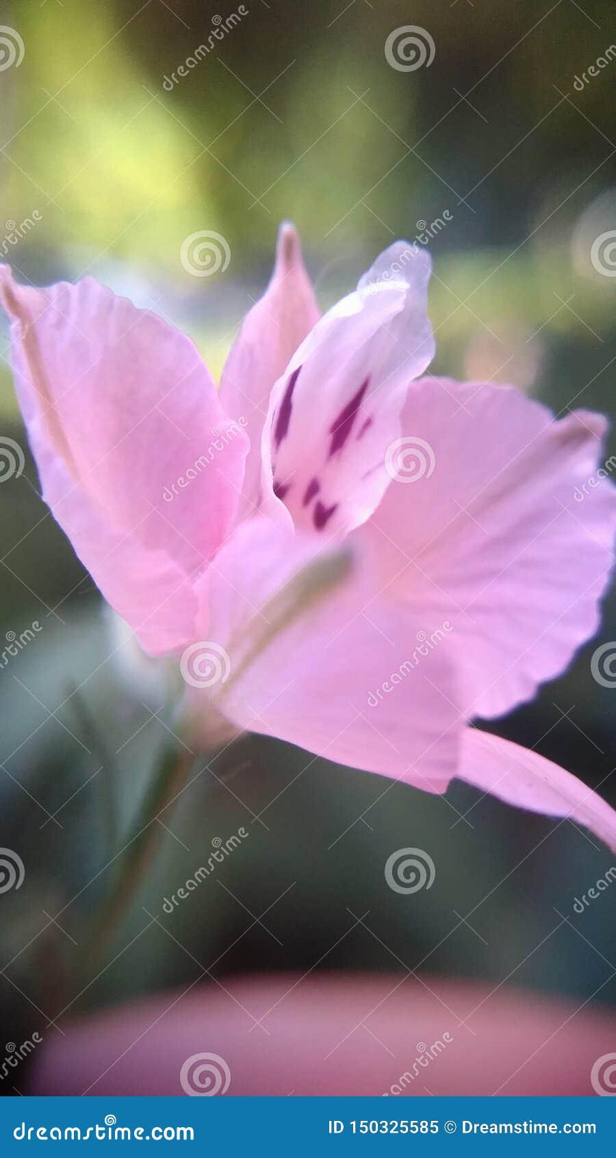 Красивые цветки в макросе снятые в городском пейзаже