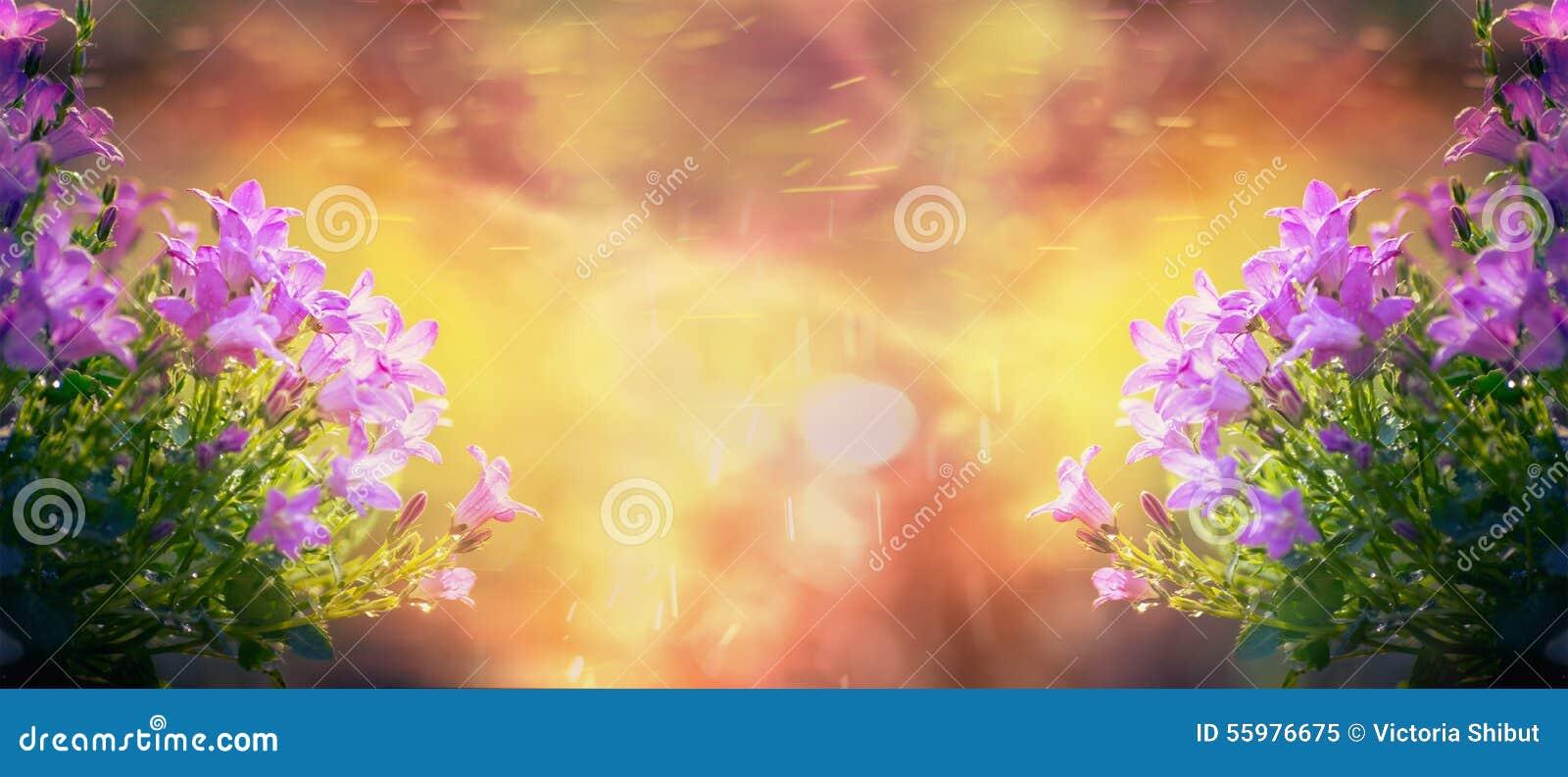 Красивые цветки колокола на восходе солнца в саде или парке, предпосылке природы, знамени