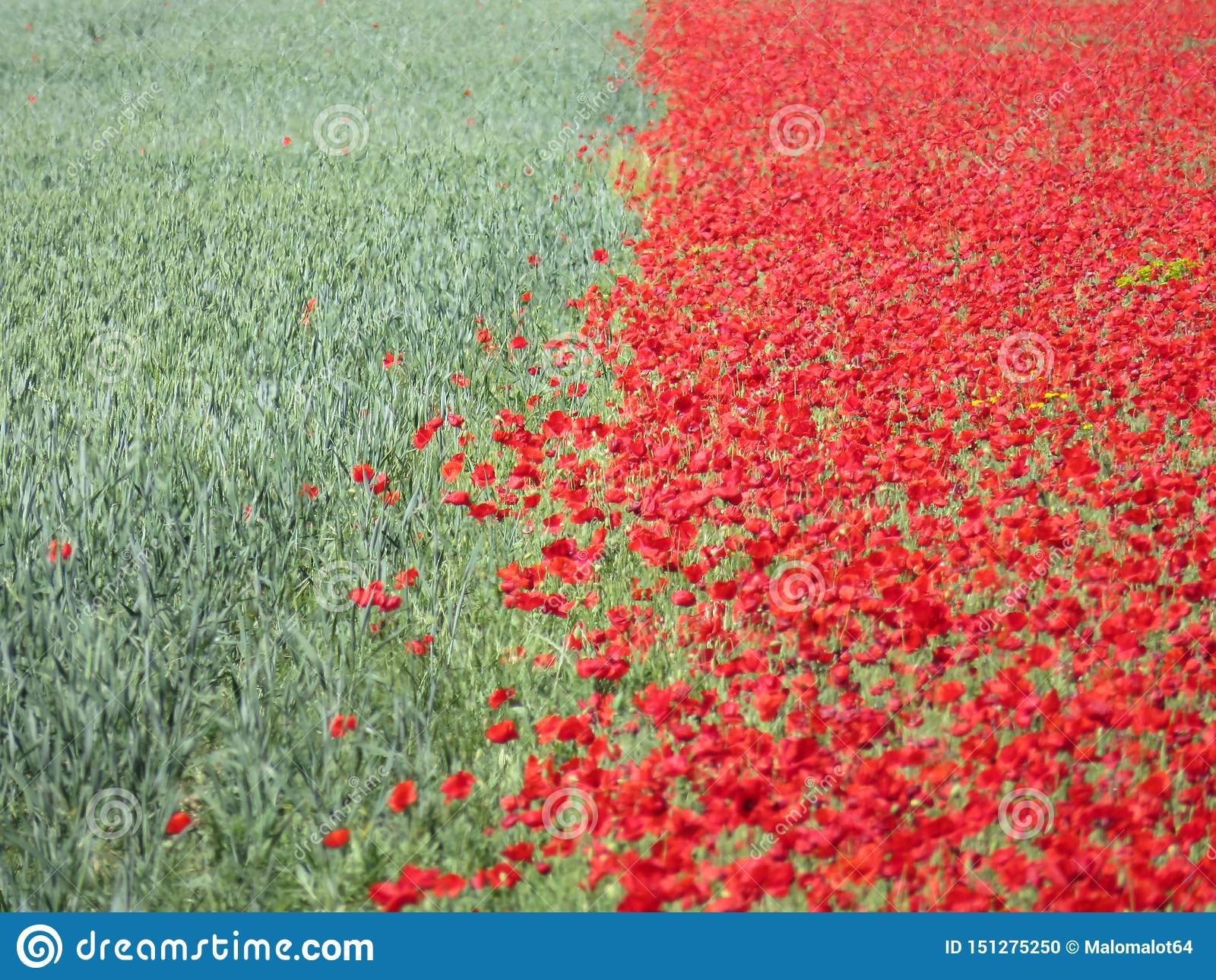Красивые цветки красные и зеленые цвета хлопьев