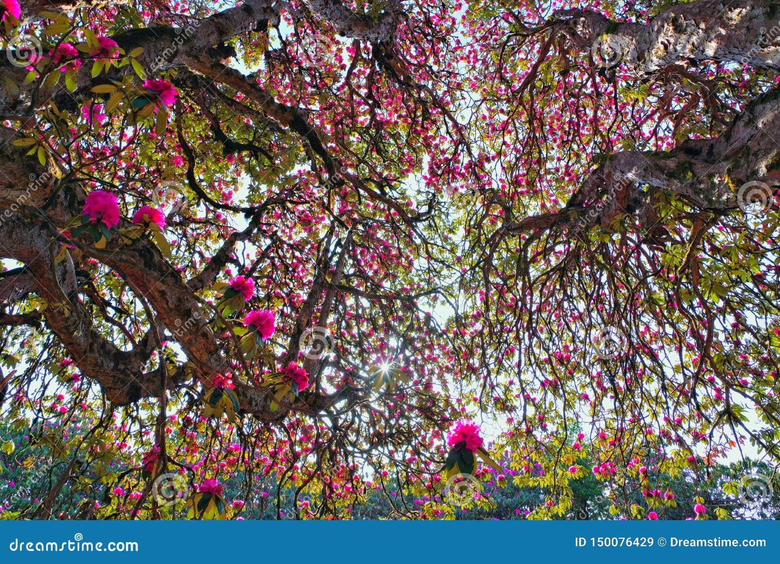 Красивые цветки Непала