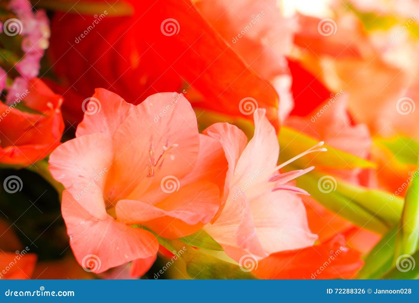 Download Красивые цветки для валентинок и сцены свадьбы Стоковое Фото - изображение насчитывающей влюбленность, торжество: 72288326