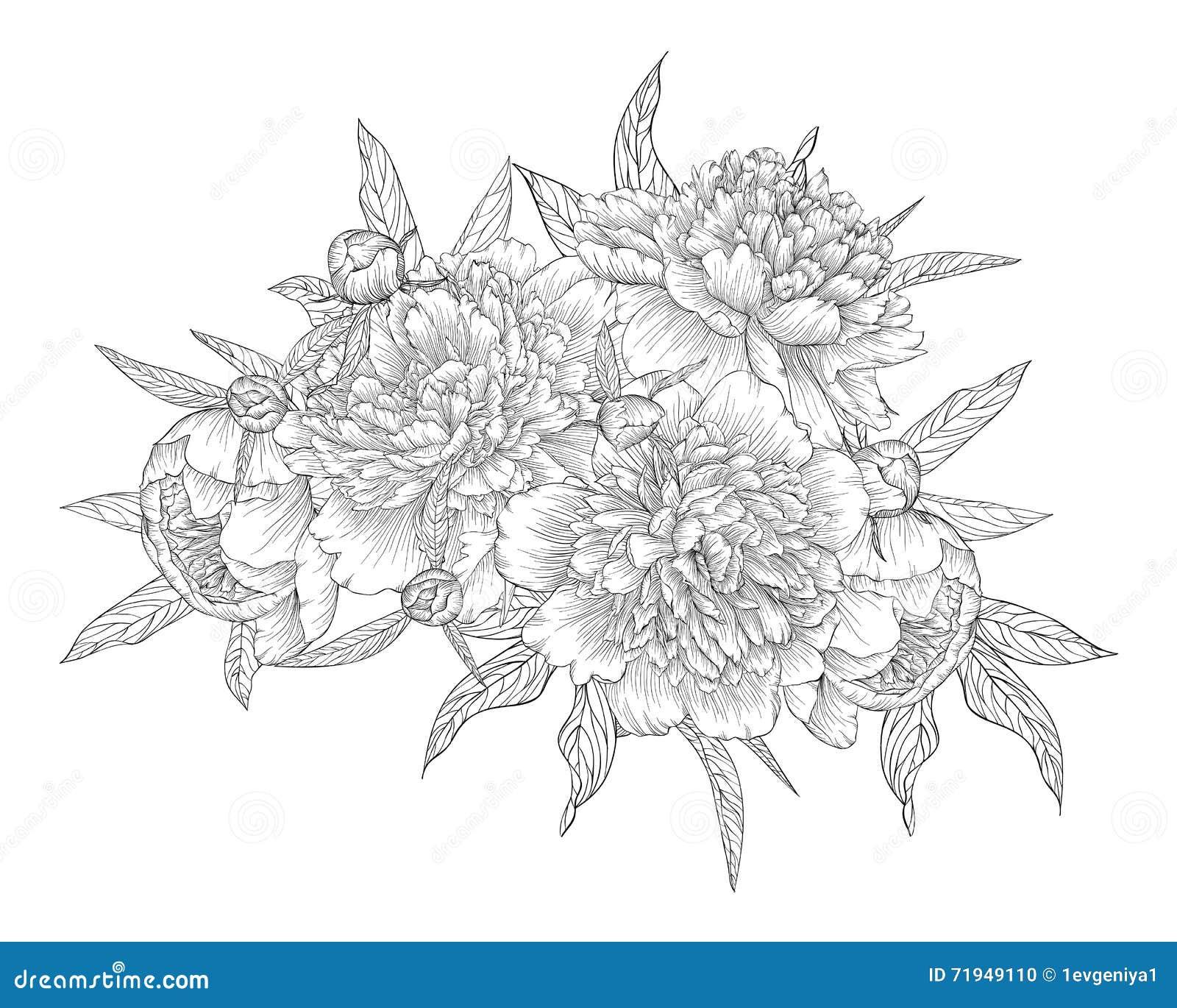 Красивые monochrome черно-белые цветки и листья