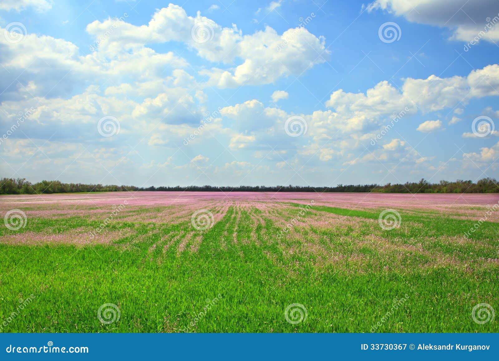 Красивый ландшафт поля лаванды