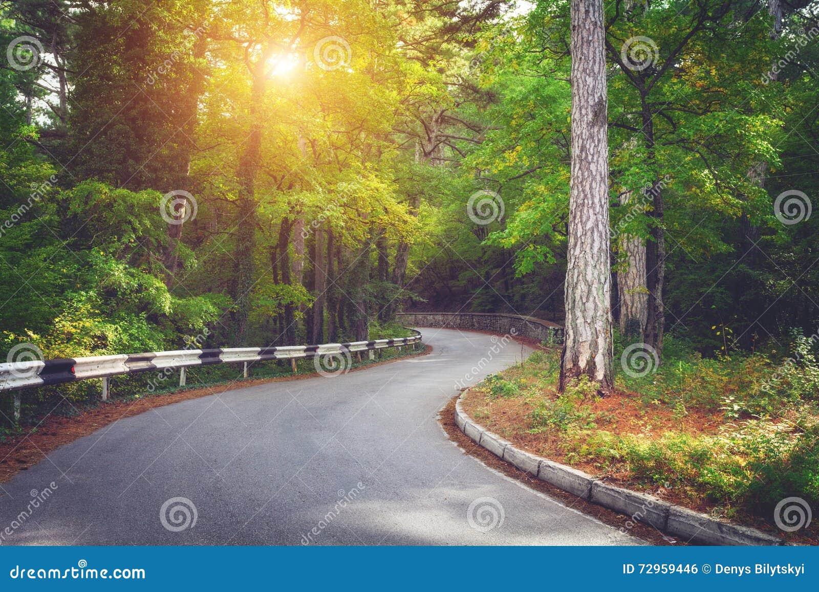Красивый ландшафт с дорогой асфальта, зеленым лесом и дорожным знаком на красочном восходе солнца в лете лето сосенки 2008 крымск