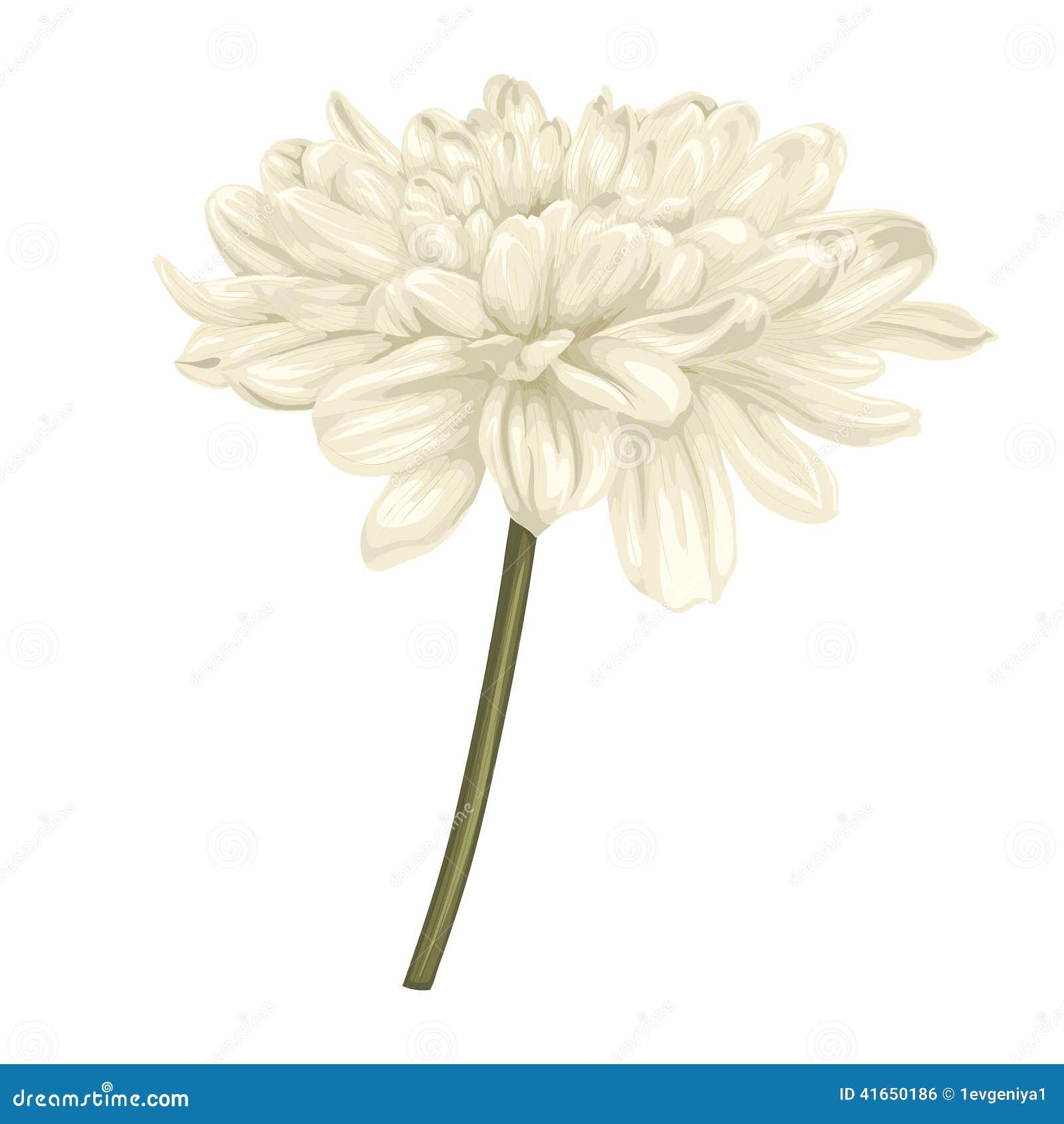 Красивый бежевый георгин с влиянием изолированного чертежа акварели на белой предпосылке