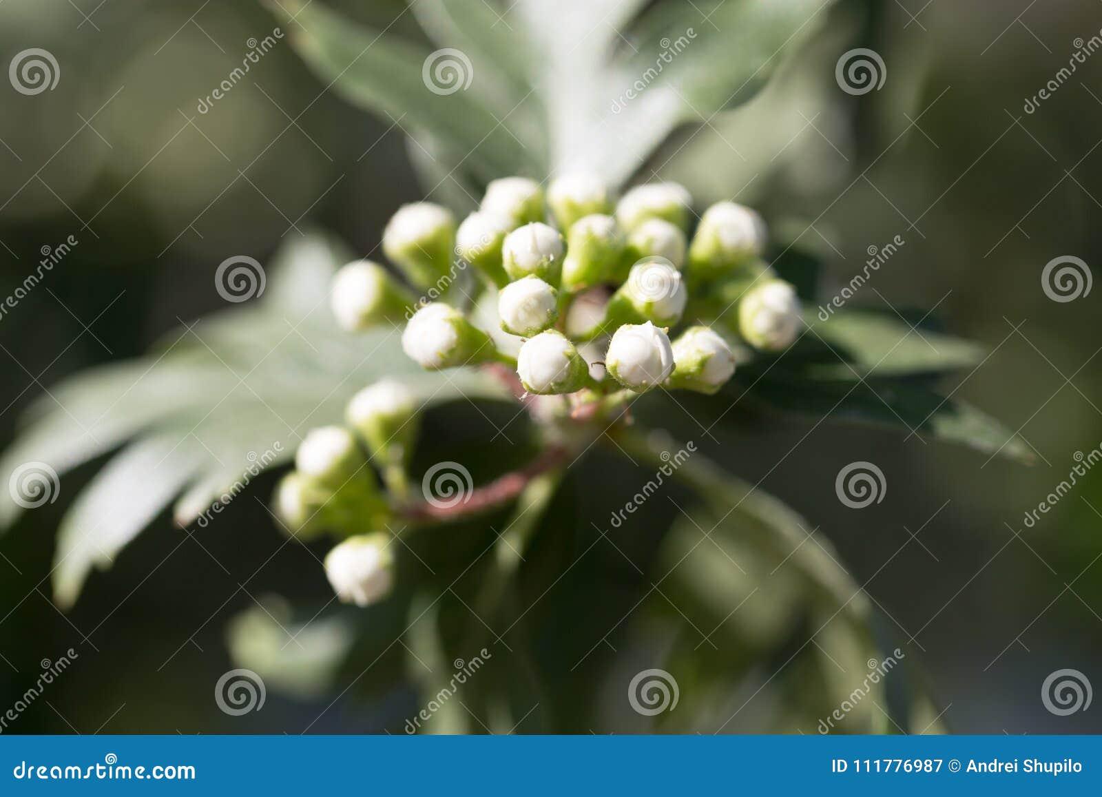Красивый белый цветок на дереве в природе