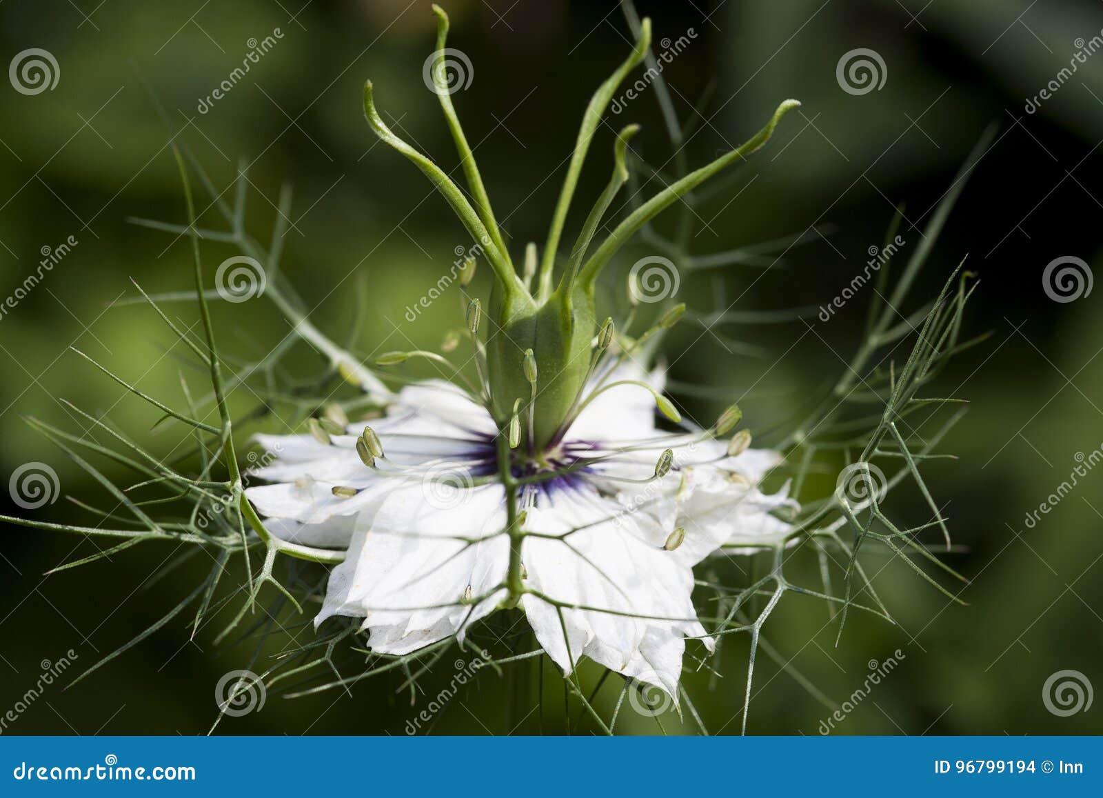 Красивый белый цветок, флористическая предпосылка