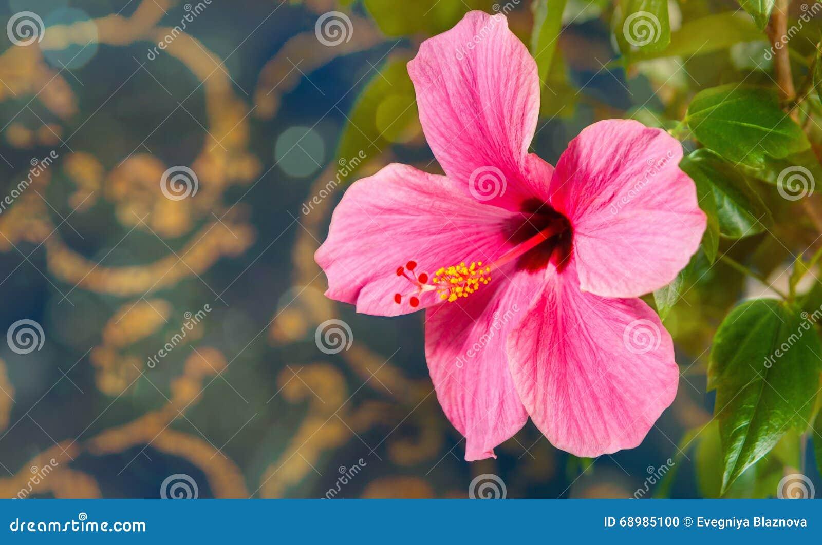 Красивый большой цветок
