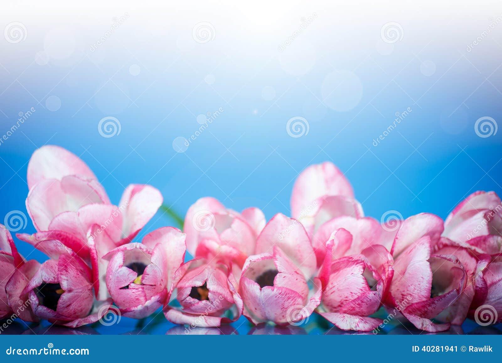 Красивый букет тюльпанов весны