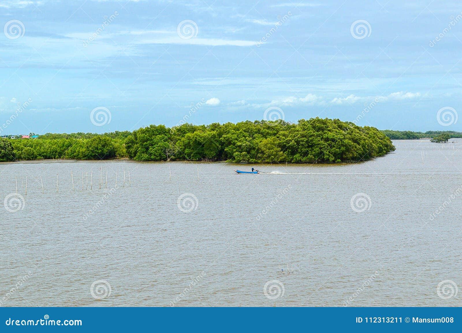 Красивый взгляд ландшафта прибрежного места консервации леса в Samutprakarn на Таиланде