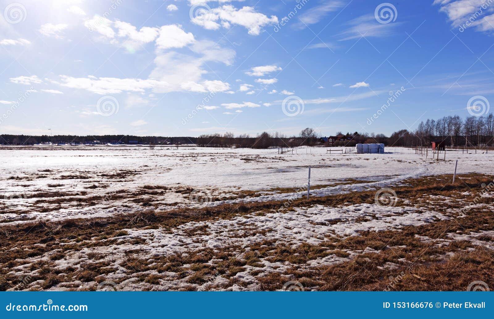 Красивый вид аграрного ландшафта в зимнем времени