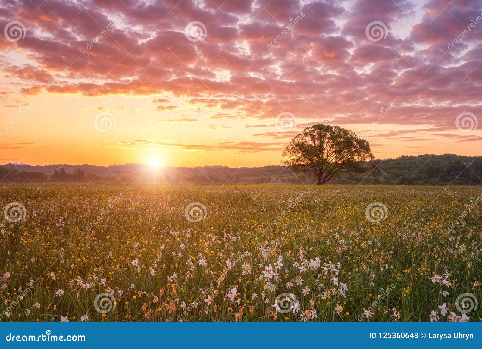 Красивый восход солнца в цветя долине, сценарном ландшафте с одичалыми растущими цветками и облачном небе цвета
