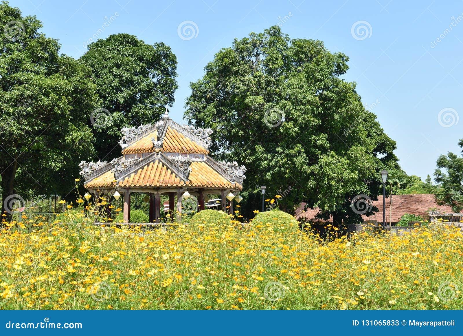 Красивый желтый сад во Вьетнаме