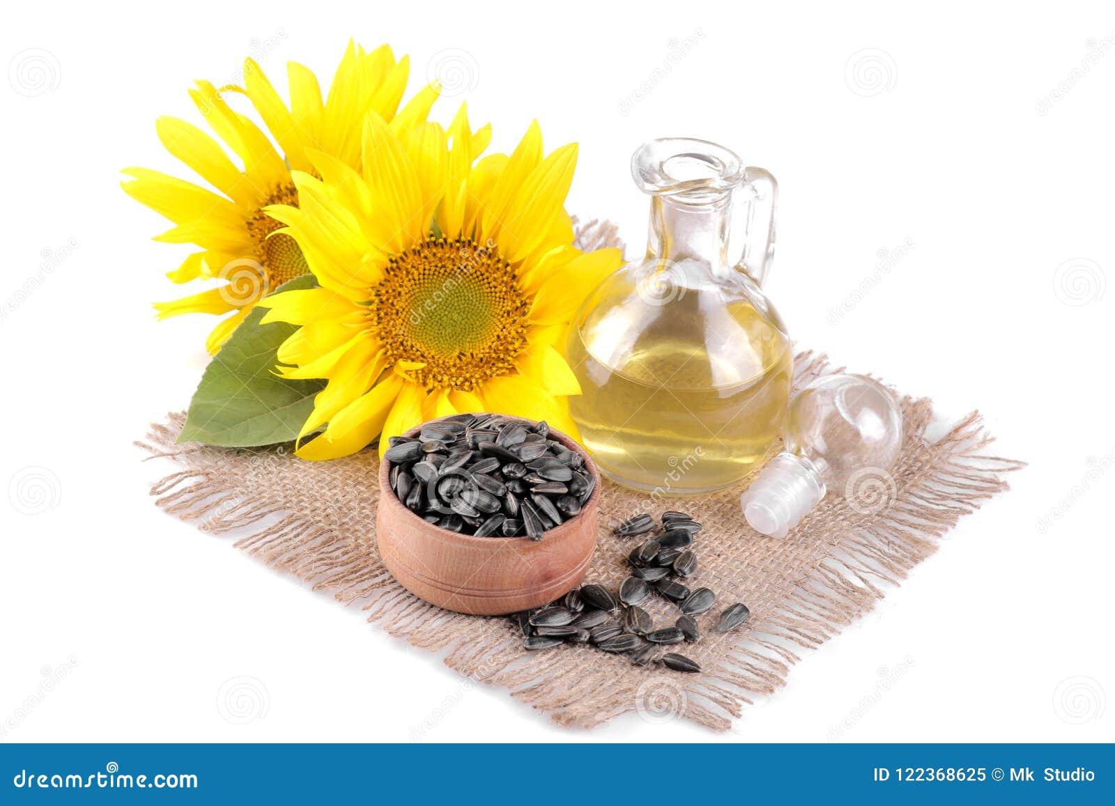 красивый желтый солнцецвет с лист и маслом и семенами семян подсолнуха на белизне изолировал предпосылку