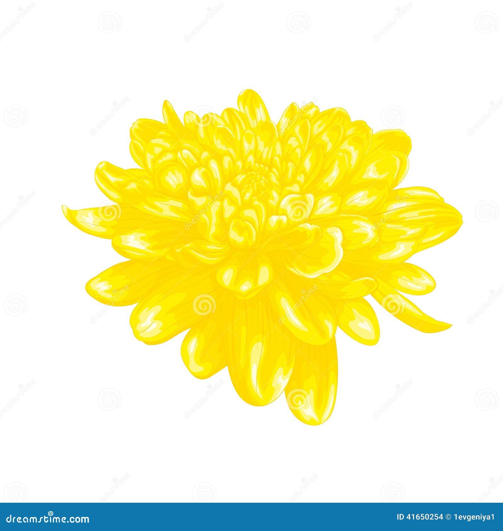 Красивый желтый георгин с влиянием изолированного чертежа акварели на белой предпосылке