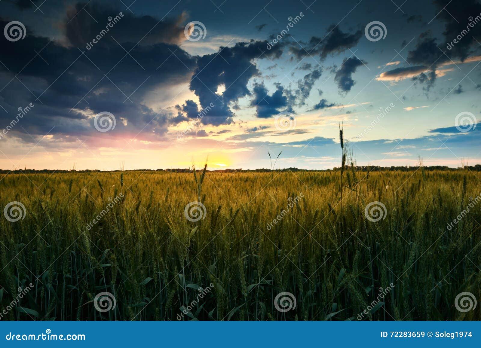 Download Красивый заход солнца в поле, ландшафте лета, ярком красочном небе и облаках как предпосылка, зеленая пшеница Стоковое Изображение - изображение насчитывающей ноча, утро: 72283659