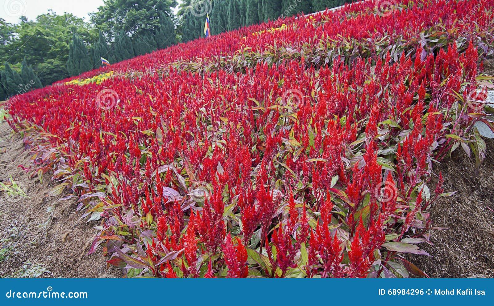 Красивый зеленый ландшафт в Путраджайя Малайзии