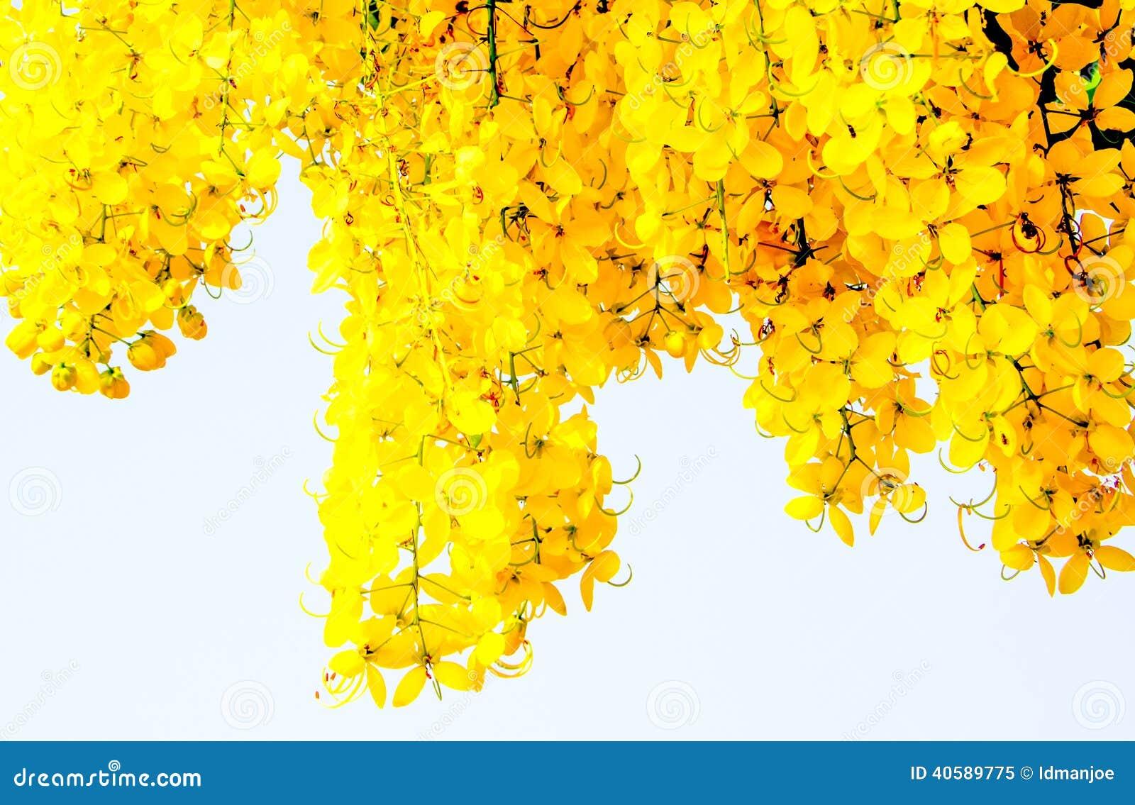 Красивый золотой ливень