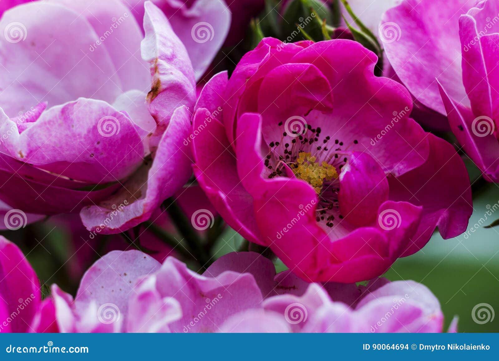 Цветок красивых слов