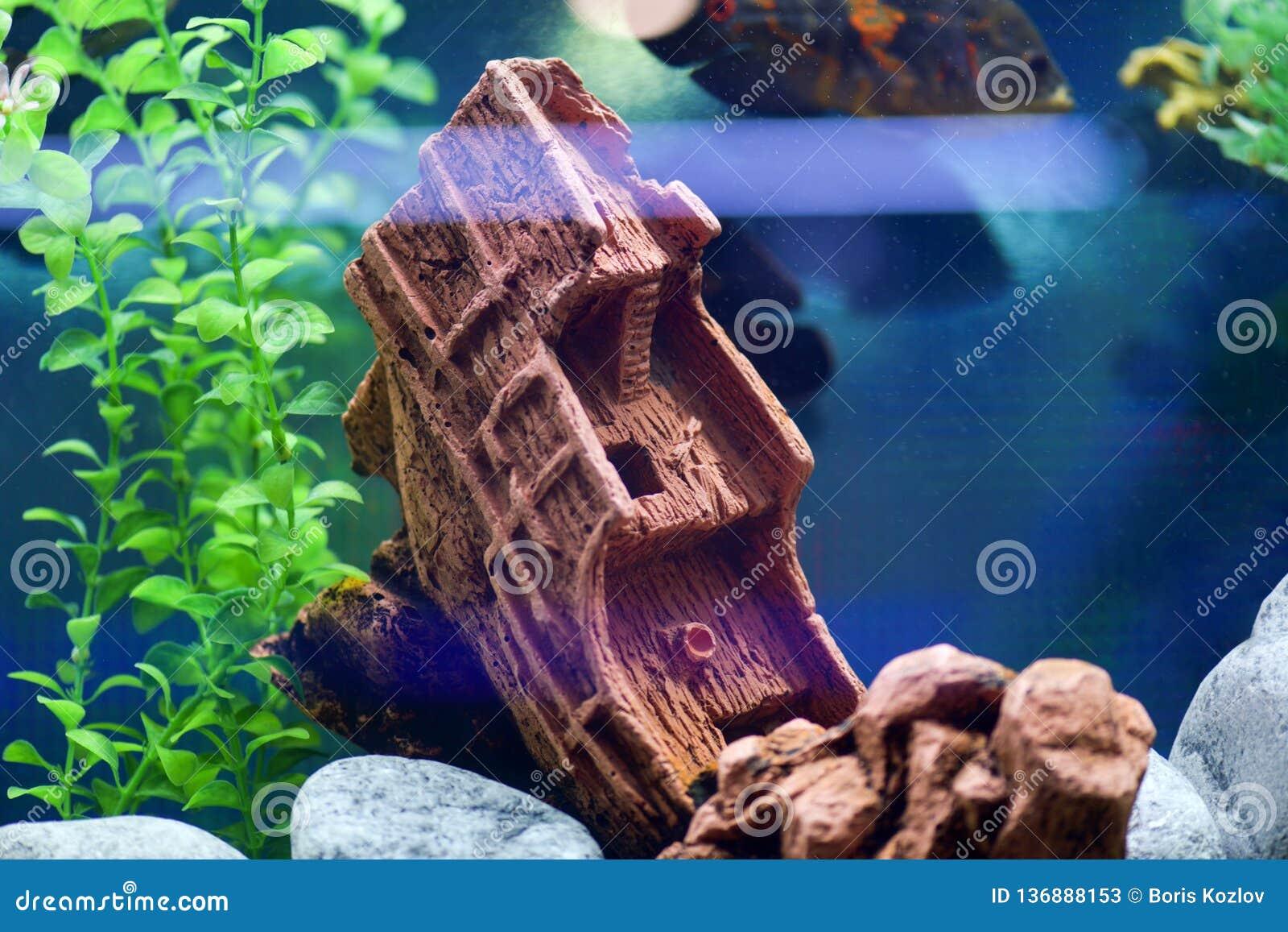 Красивый и творческий дизайн аквариум-утонутого корабля на голубой предпосылке