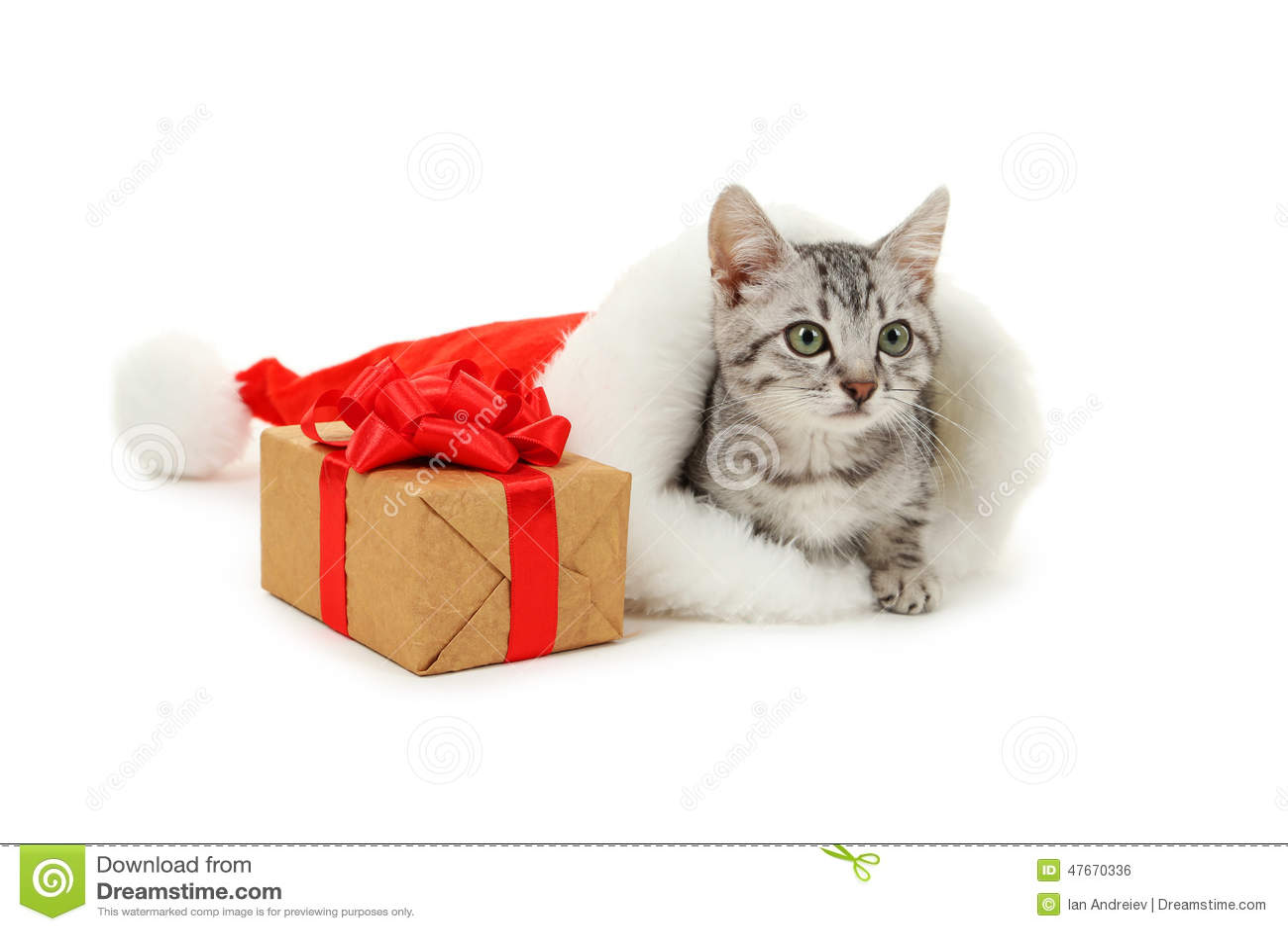 Подарочная коробка кот