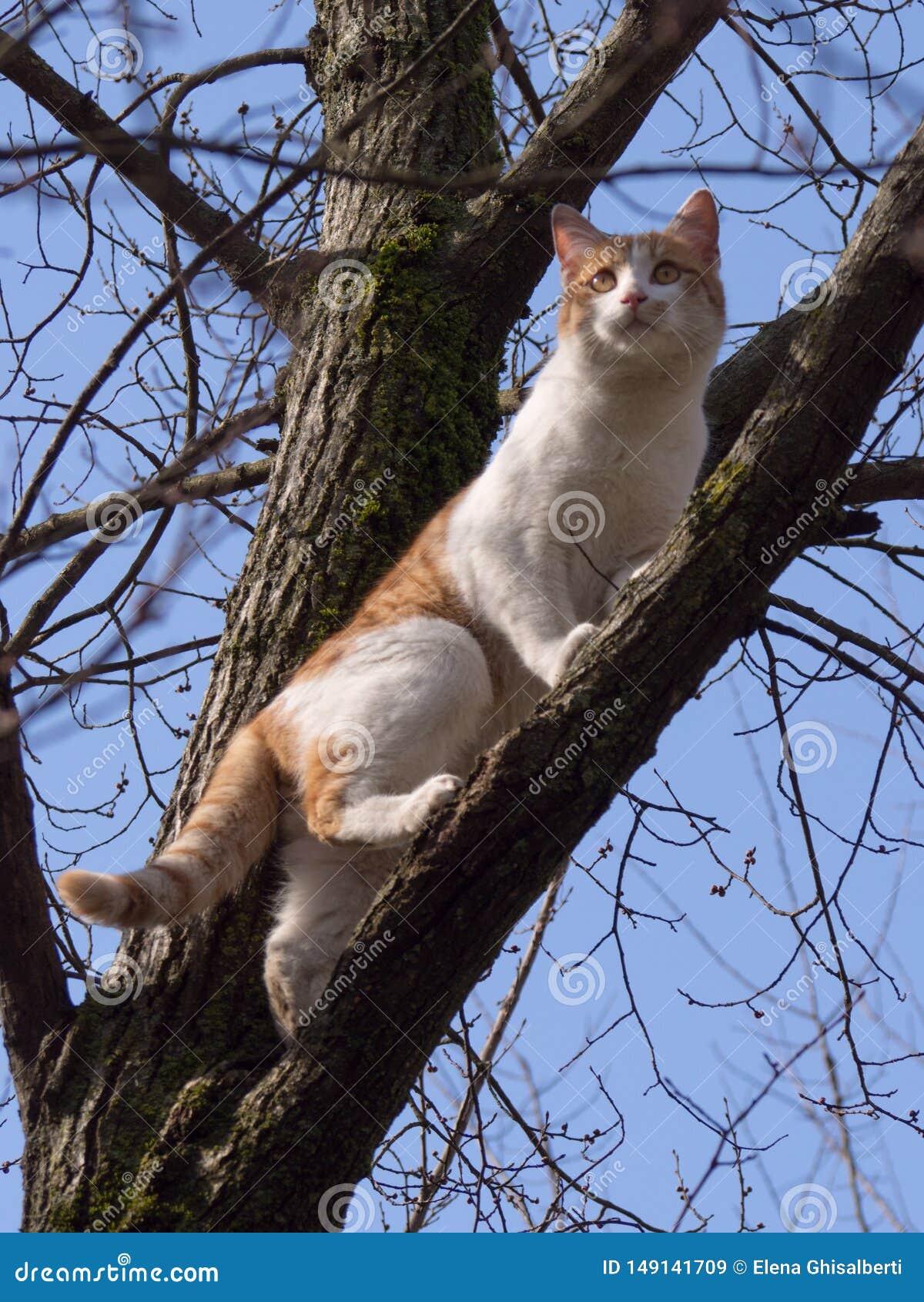 Красивый кот на дереве